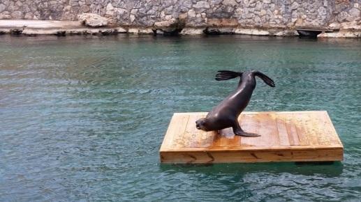 Apresentação de Leão Marinho, Sea Aquarium